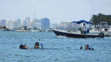 Photo of Plongée sous-marine et snorkeling en Floride