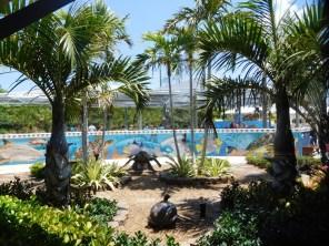 Tortues au Loggerhead Marine Life Center à Juno Beach / Floride