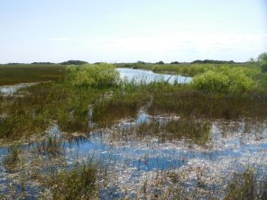 Shark Valley / Parc National des Everglades