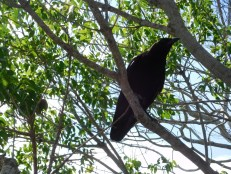 Oiseau à Shark Valley / Parc National des Everglades