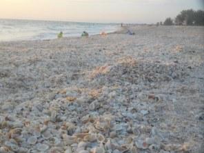 Coquillages sur la Plage de Casey Key / Nokomis / Floride