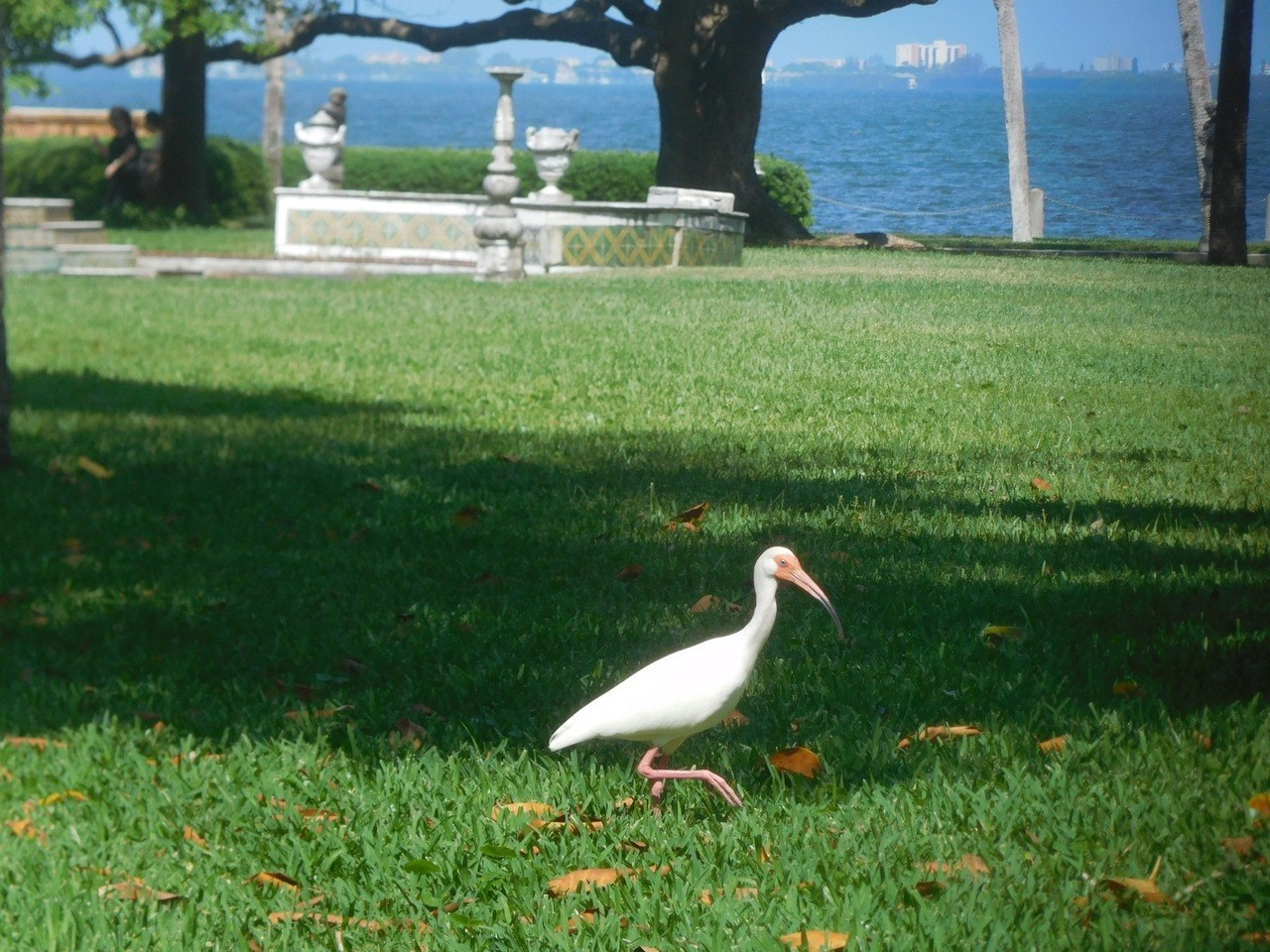 Oiseau au Ringling Museum à Sarasota / Floride