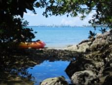 Mangrove à Sandspur Island et Skyline de MIami