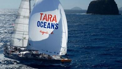 Photo of Tara a quitté Lorient et arrive à Miami le 28 juin !