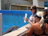 Les dauphins du Marineland de St Augustine en Floride
