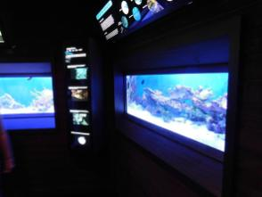 Aquarium du John Pennekamp Coral Reef State Park / Key Largo / Floride