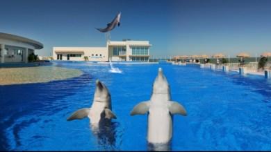 Photo of Marineland de St Augustine : les dauphins pour passion depuis 1938