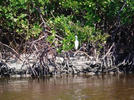 Plage de Clam Pass Park à Naples en Floride