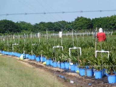 Agriculteurs dans le Redland de Homestead (près de Miami en Floride)