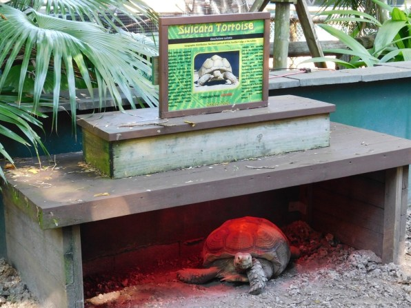 Tortue à Monkey Jungle (à Homestead, au sud de Miami)