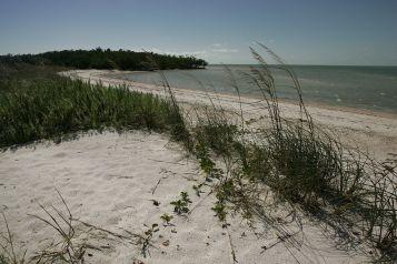 Plage sur les 10 000 Islands des Everglades