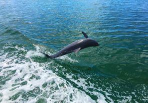 Croisière privée en Français et dauphins, à Miami et Miami Beach en Floride.