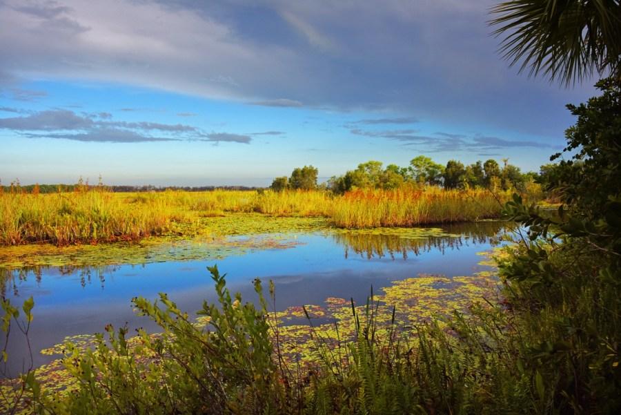 Savannas Preserve State