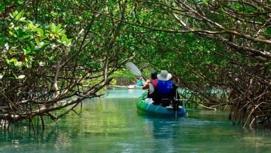 Photo of Canoë et kayak en Floride : les plus beaux endroits pour en faire à Miami et ailleurs