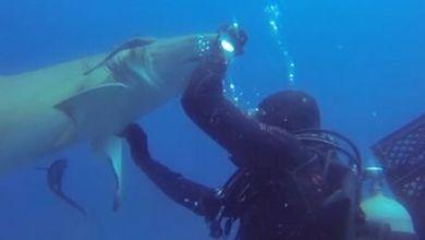 Photo of Floride : Un plongeur vient en aide à un requin à Jupiter (vidéo)