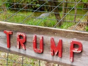 """Alligator dénommé """"Trump"""" au Billie Swap Safari, dans les Everglades de Floride (réserve Miccosukee de la forêt Big Cypress)"""