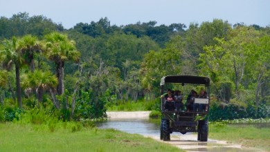Photo of Billie Swamp Safari : réserve indienne, airboats et attractions dans les Everglades