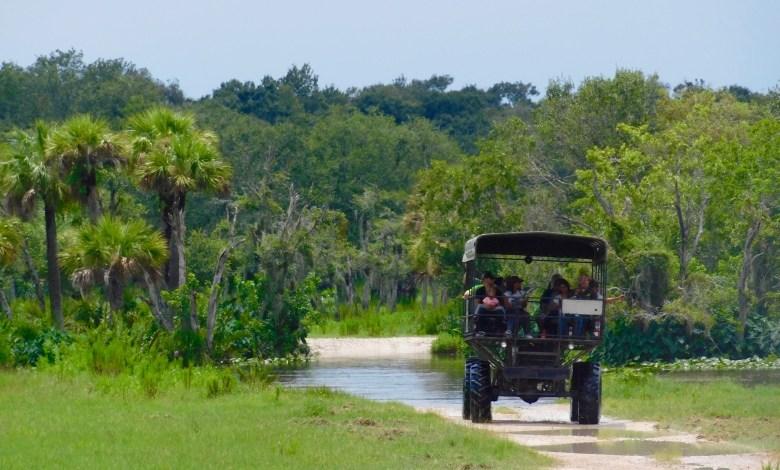 Billie Swap Safari, dans les Everglades de Floride (réserve Miccosukee de la forêt Big Cypress)