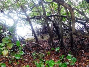 Crane Point Park sur l'île de Marathon, dans les Keys de Floride
