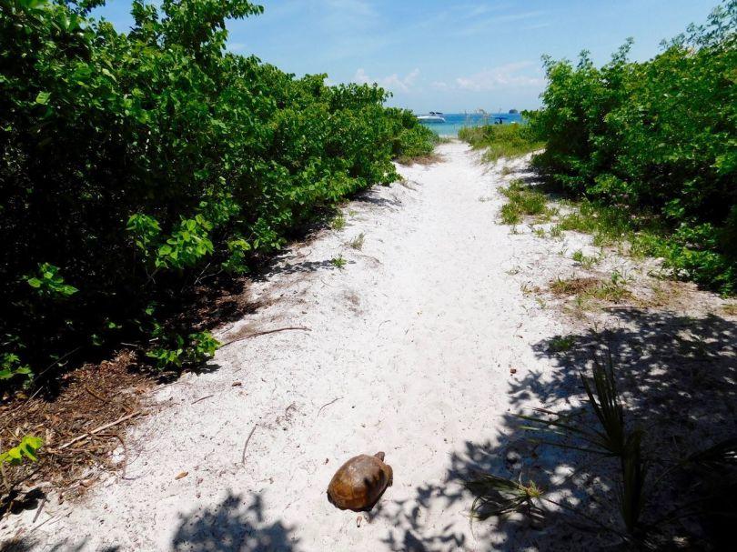 Tortue sur Egmont Key au large de St Petersburg en Floride