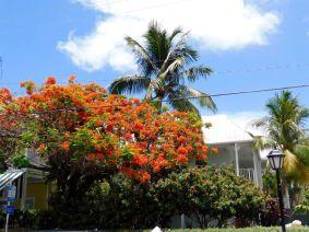 Rues de Key West