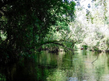 Descente en canoë-kayak de la Little Manatee River (à Wimauma, entre Tampa et Bradenton)