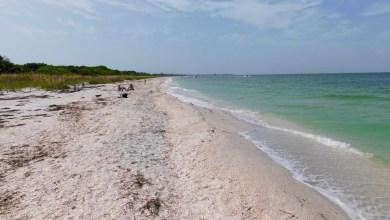 Photo of Cayo Costa : l'île sauvage aux coquillages (près de Fort Myers en Floride)