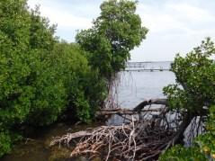 Île de Cayo Costa (entre Captiva et Boca Grande, dans le comté de Lee en Floride)