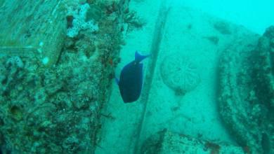 Photo of Neptune Memorial Reef : un cimetière sous-marin à Key Biscayne en Floride