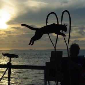 Dominique Lefort, le Cat Man français de Key West