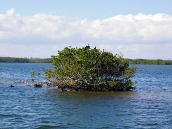 Mangrove dans le Biscayne National Park