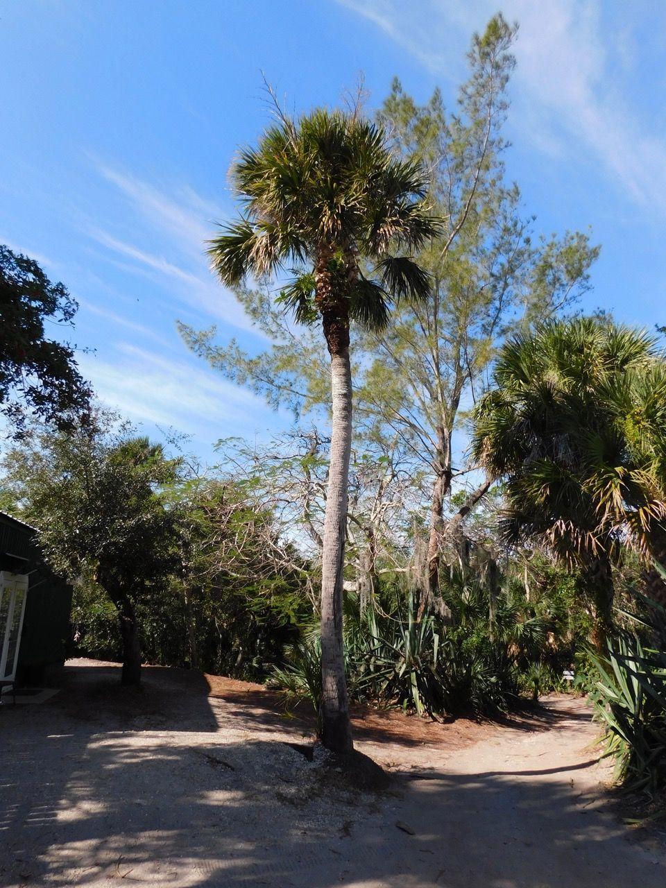 Ile De Cabbage Key Island Floride 2345 Le Courrier De