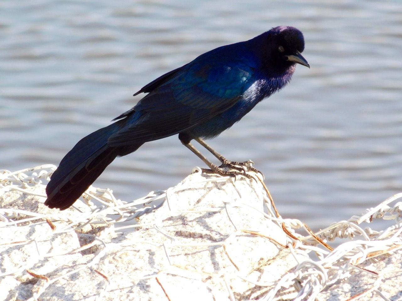 Oiseau sur le Lac Okeechobee à Clewiston, en Floride
