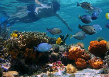 Bahamas - Plongée