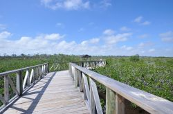 Bahamas Grand Bahama - Lucayan National Park