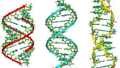 Photo of Révolution dans la recherche criminelle basée sur l'ADN