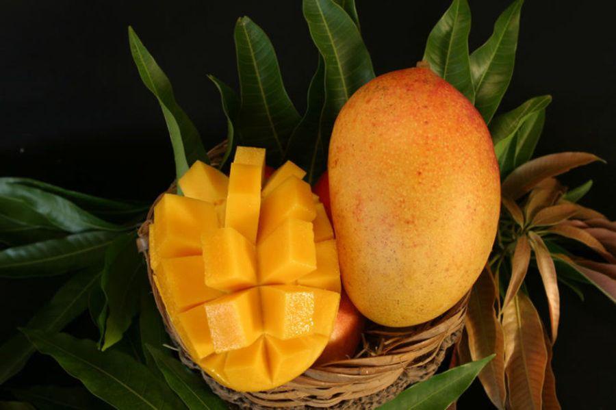 South Beach Mango Festival de miami beach