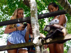 Singe araignée à la Cenote Verde Lucero de Puerto Morelos (près de Cancun au Mexique)