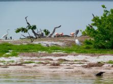 La Isla de los Pajaros, près de l'île de Holbox.