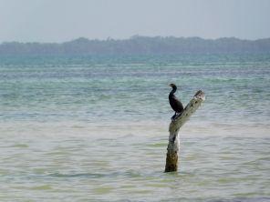 La Isla de la Pasion, près de l'île de Holbox.