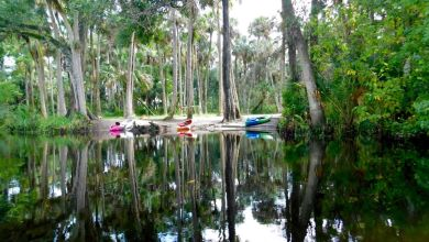 Photo of Loxahatchee River : la plus belle rivière du sud de la Floride