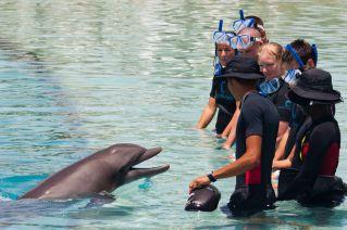 Bahamas Paradise Island - Atlantis Dolphin Cay