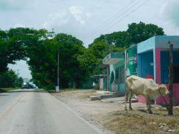 Scène de rue dans le Yucatan