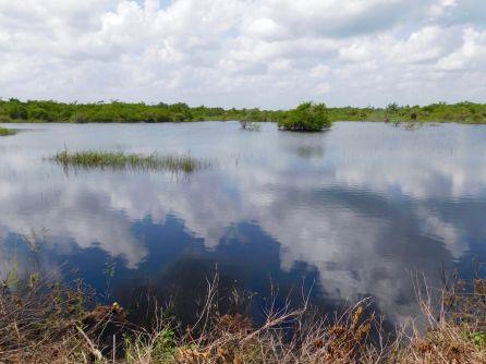 Esperanza : l'une des rares étendues d'eau claire du Yucatan !