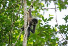 Photo of Parc de Punta Laguna : une immersion dans la nature près de Cobà (à la frontière du Q-Roo et du Yucatan)