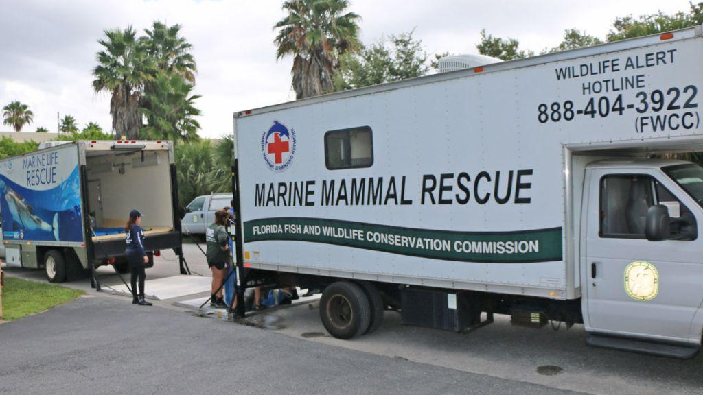La FWC tentant de sauver les animaux de la marée rouge en Floride.
