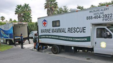 Photo of Red Tide de Floride : le gouverneur a décrété l'état d'urgence contre la marée rouge