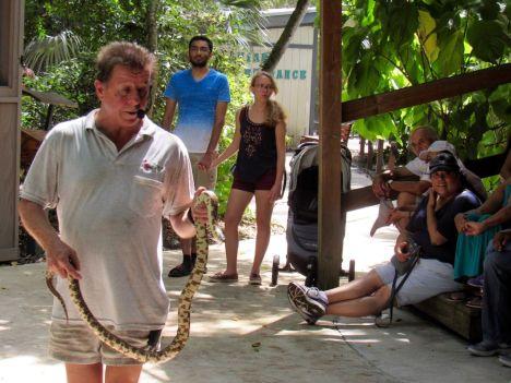 King Snake de Floride au Flamingo gardens de Davie en Floride