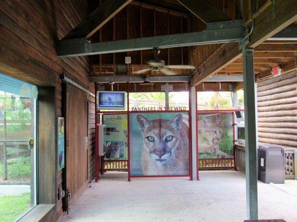 Panthères de Floride au zoo de Miami