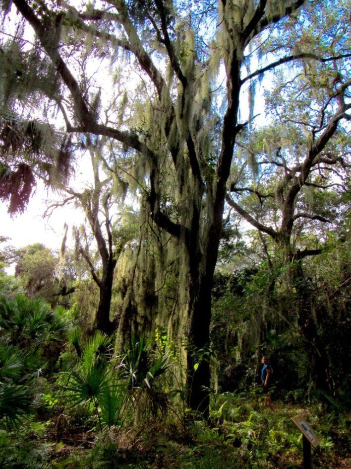 Parc Delray Oaks à Delray Beach en Floride